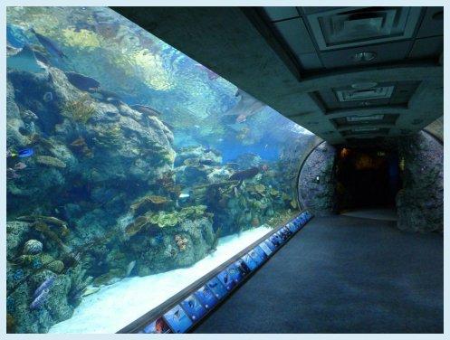 aquariumtunnel